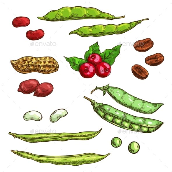 Nuts, Kernels And Berries Vector Icons