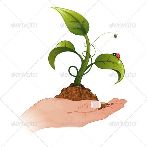 Woman Hand with the Sprout - Flowers & Plants Nature