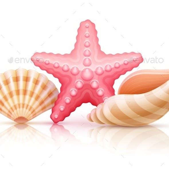Set Of Summer Sea Shells And Starfish