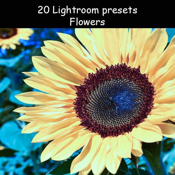 Ed Flowers Lr Presets