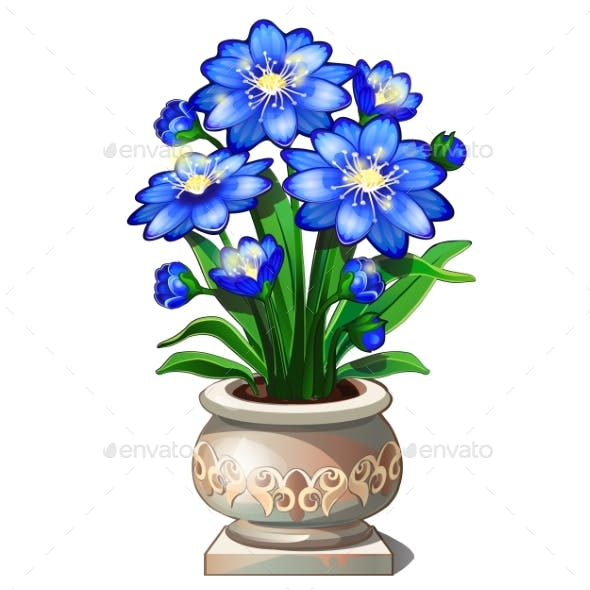 Bright Blue Flowers in Ceramic Pot