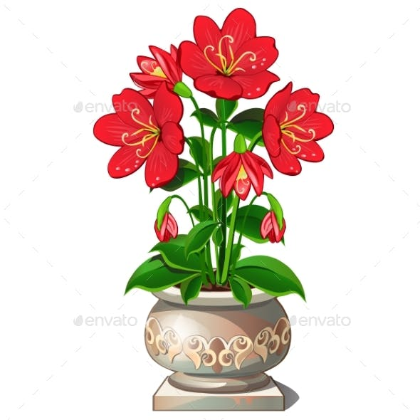 Bright Red Flowers in Ceramic Pot
