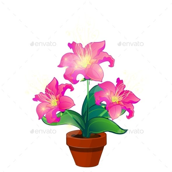 Bright Pink Magic Flowers in Pot
