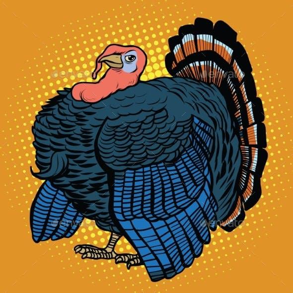 Poultry Turkey