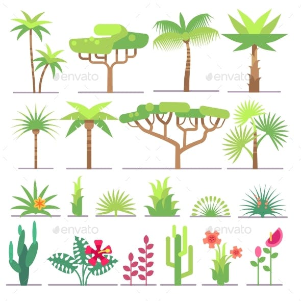 Different Types Of Tropical Plants, Trees, Flowers
