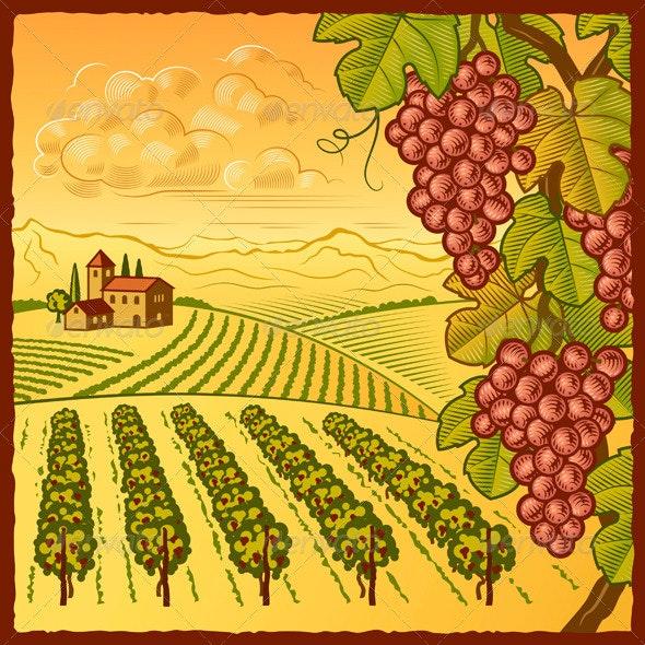 Vineyard Landscape - Landscapes Nature