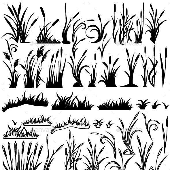 Reeds. Marsh Grass