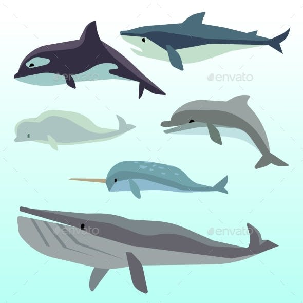 Whales And Dolphins, Marine Underwater Mammal