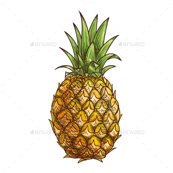 Pineapple Exotci Tropical Fruit Isolated Sketch