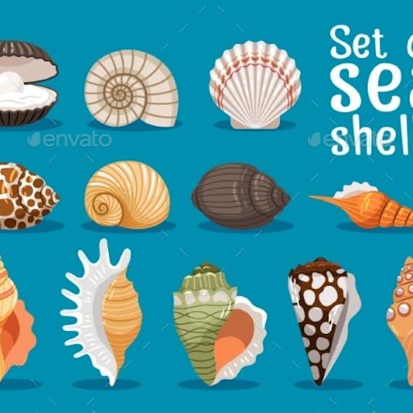 Sea Shells Flat Icons Set
