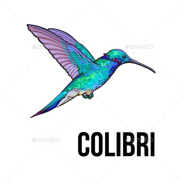 Hand Drawn Sapphire Hummingbird Colorful Sketch