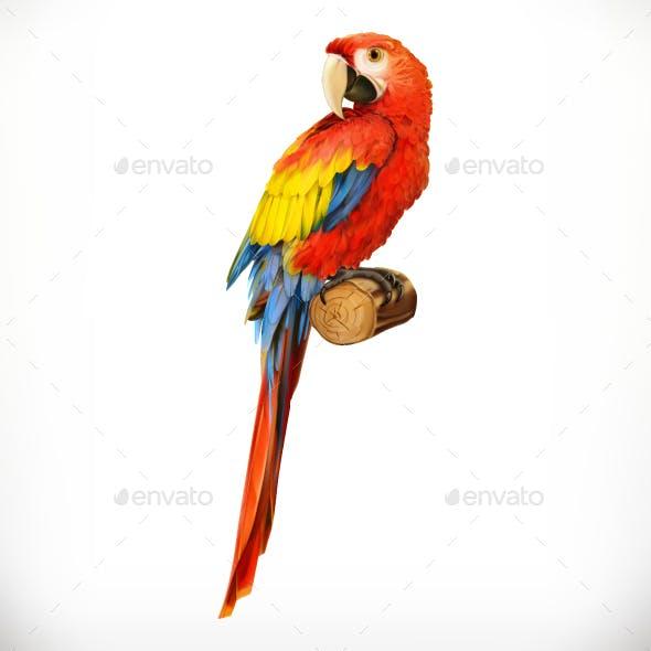 Ara Parrot Macaw