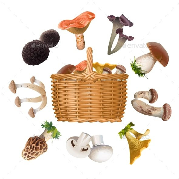 Collection of Various Species Edible Mushrooms
