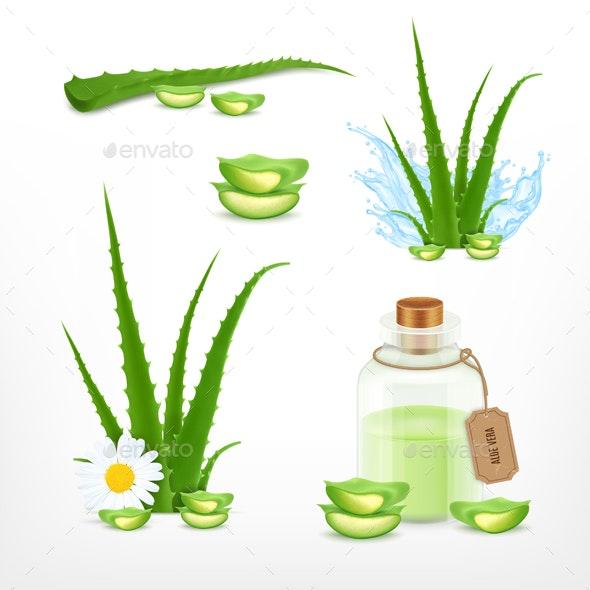 Aloe Vector Icons Set - Flowers & Plants Nature
