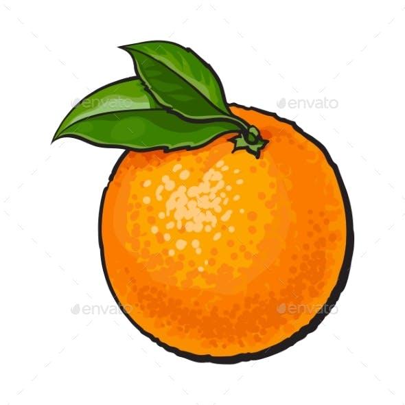 Realistic Colorful Hand Drawn Ripe Orange