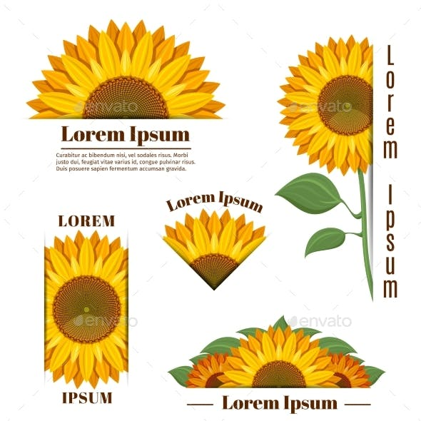 Sunflower Banners and Vector Yellow Sun Flower