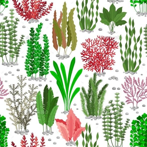 Seaweed Seamless Pattern. Sea Weed Fur Vector