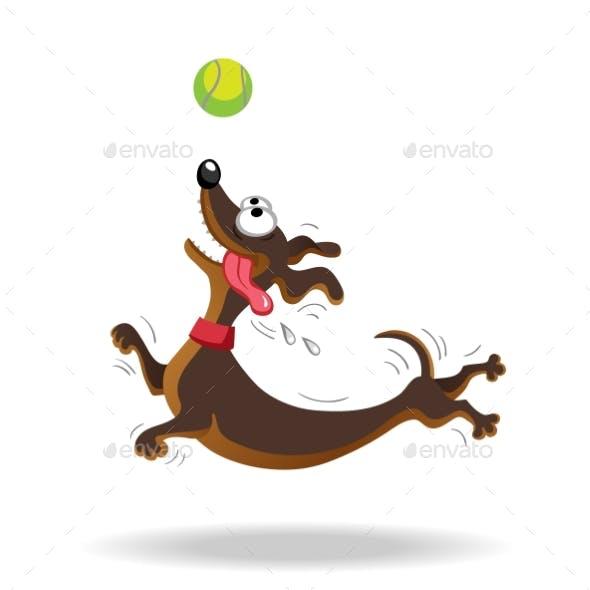 Dachshund Dog Playing with Tennis Ball