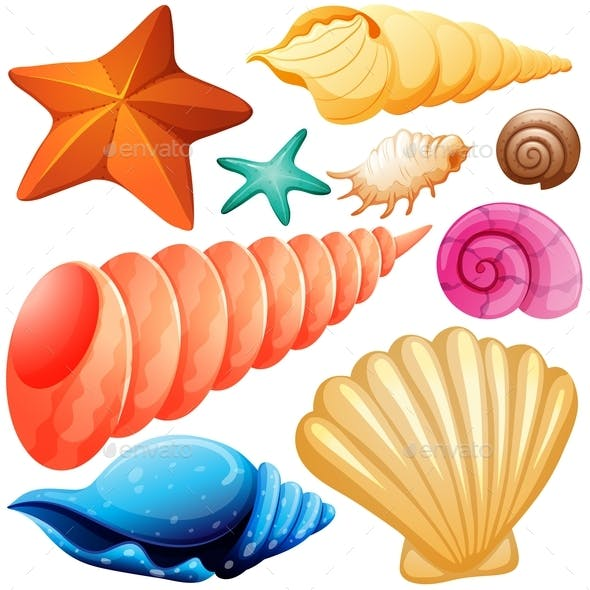 Different Types of Seashells