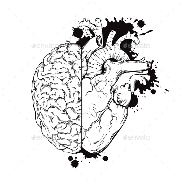 Human Brain and Heart Half