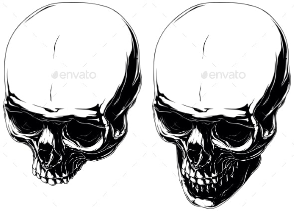 Graphic Detailed Human Skulls Set