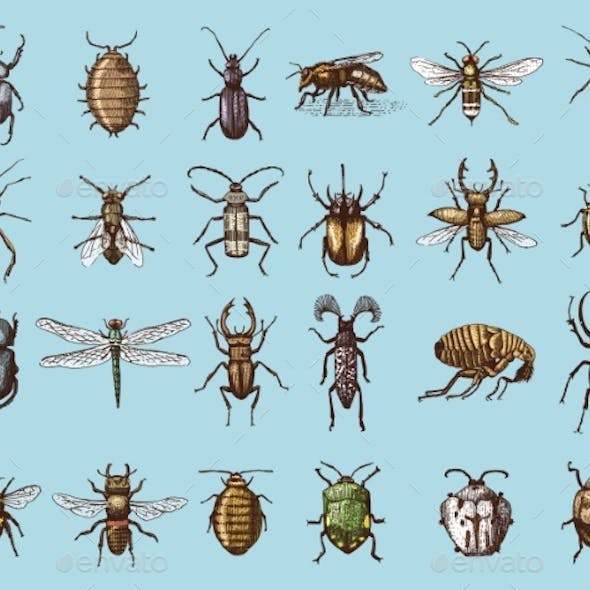 Set of Insects and Bugs