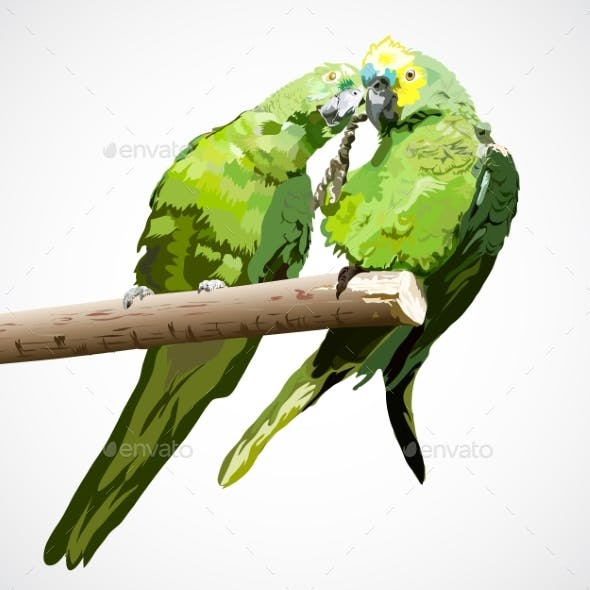 Two Light Green Parrots