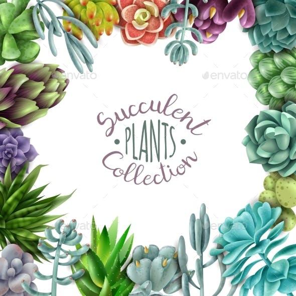 Succulent Plants Collection
