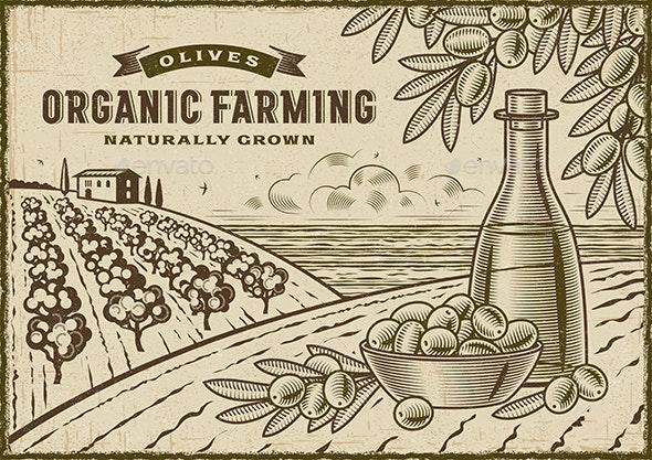 Olive Organic Farming Landscape - Landscapes Nature