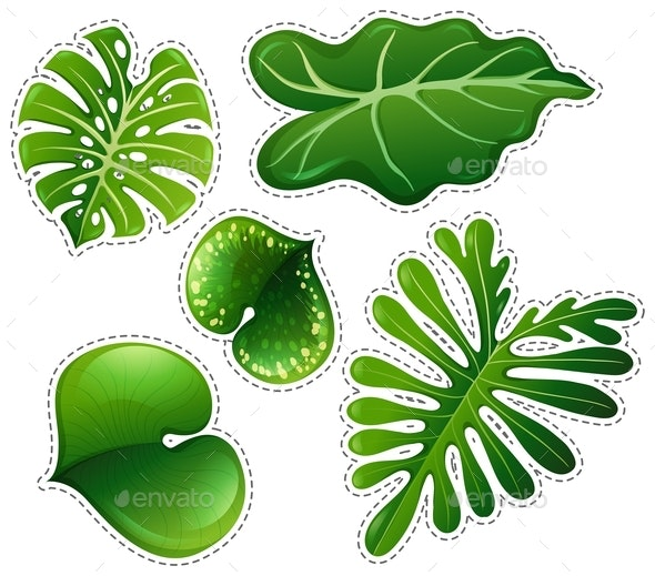 Sticker Set of Green Leaves - Flowers & Plants Nature