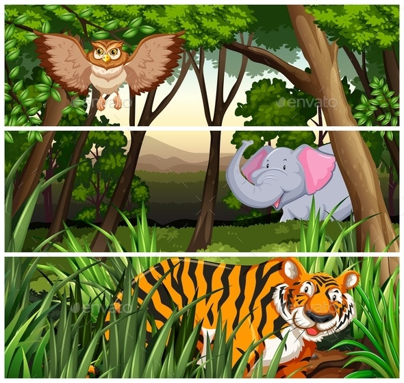 Wildlife in the Jungle - Animals Characters