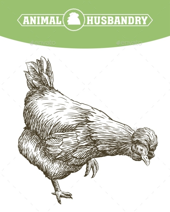 Chicken Breeding - Animals Characters