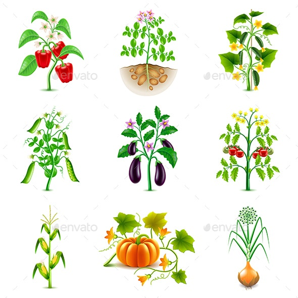 Growing Agricultural Plants Icons Vector Set - Flowers & Plants Nature