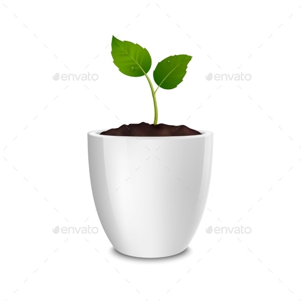 Growth Concept - Flowers & Plants Nature