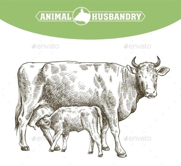 Livestock - Animals Characters
