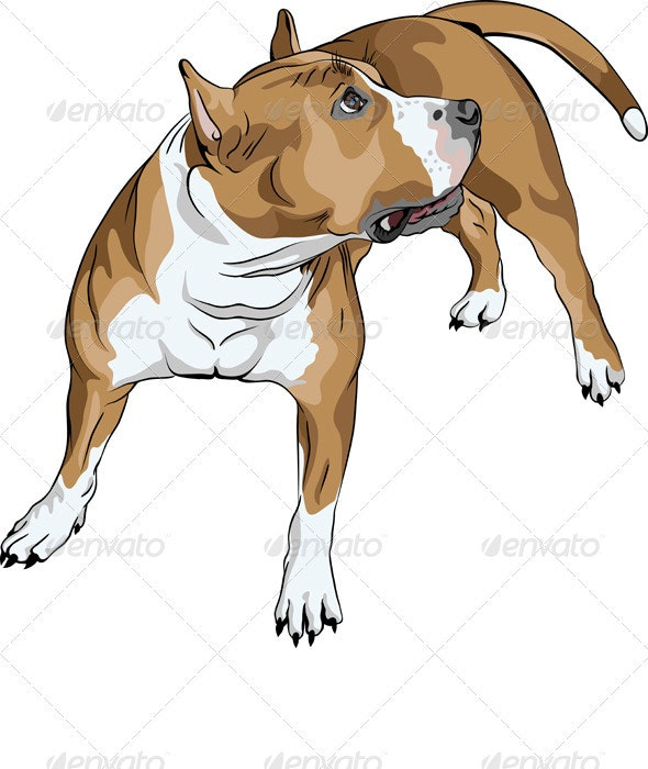 Vector Dog American Staffordshire Terrier breed - Animals Characters