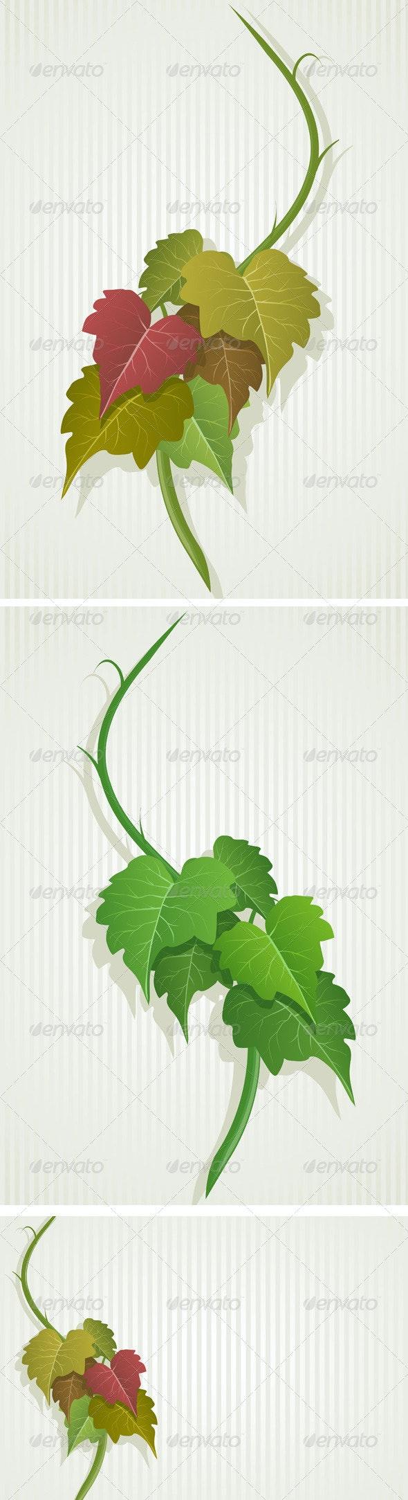 Green Grape Leaves - Flowers & Plants Nature