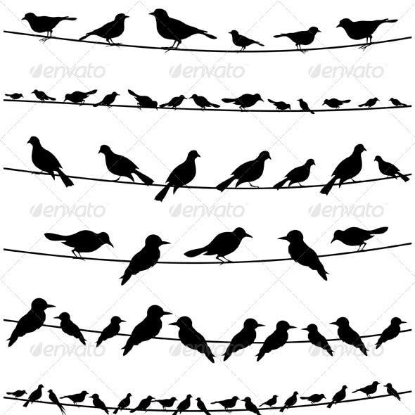 Bird on a wire2