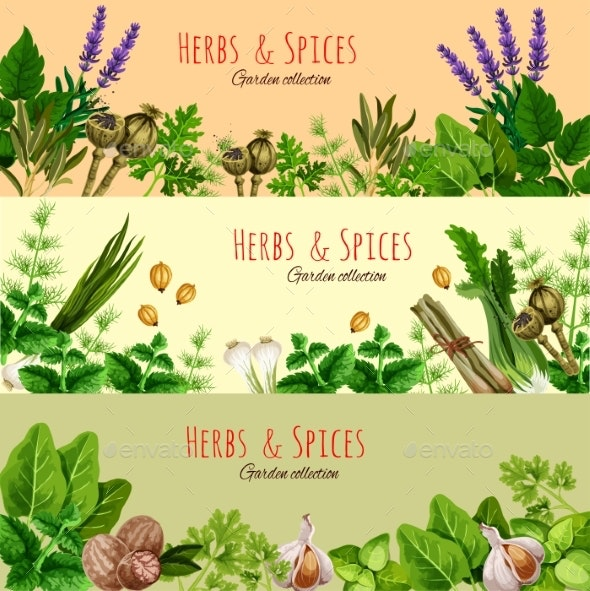 Herbs, Spices and Condiments Cartoon Banner Set - Food Objects