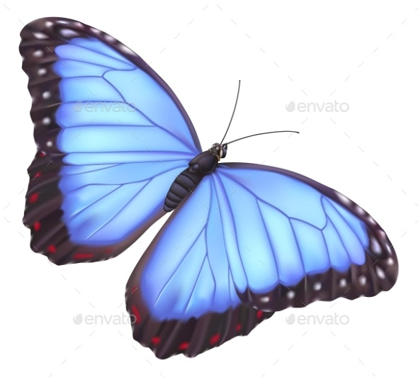 Blue Morpho Butterfly - Animals Characters