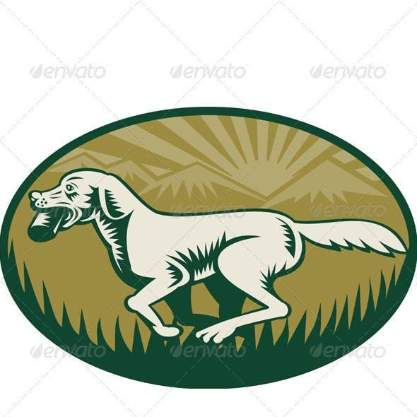 Golden Retriever Hunting Dog Running