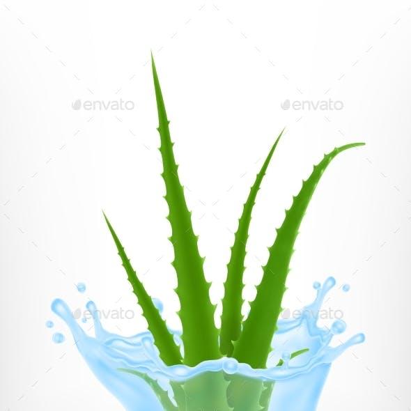 Aloe with Water Splash