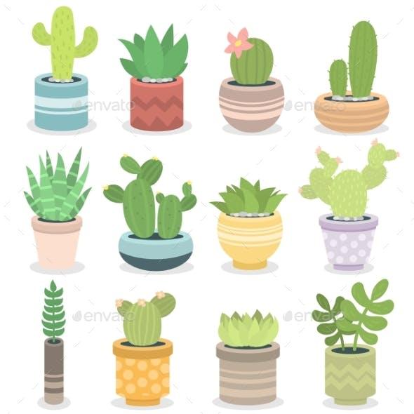 Cactus Nature Green Succulent Tropical Plant