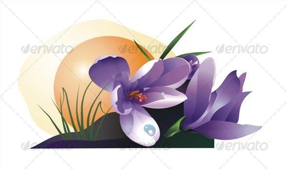 Crocus - Flowers & Plants Nature