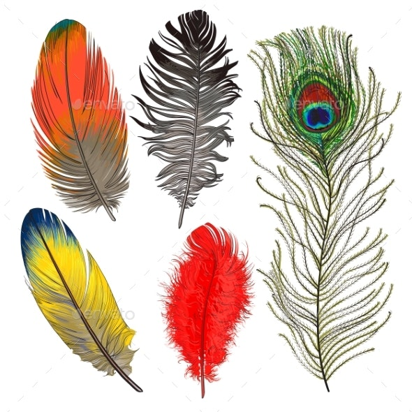 Hand Drawn Set of Various Colorful Bird Feathers - Animals Characters
