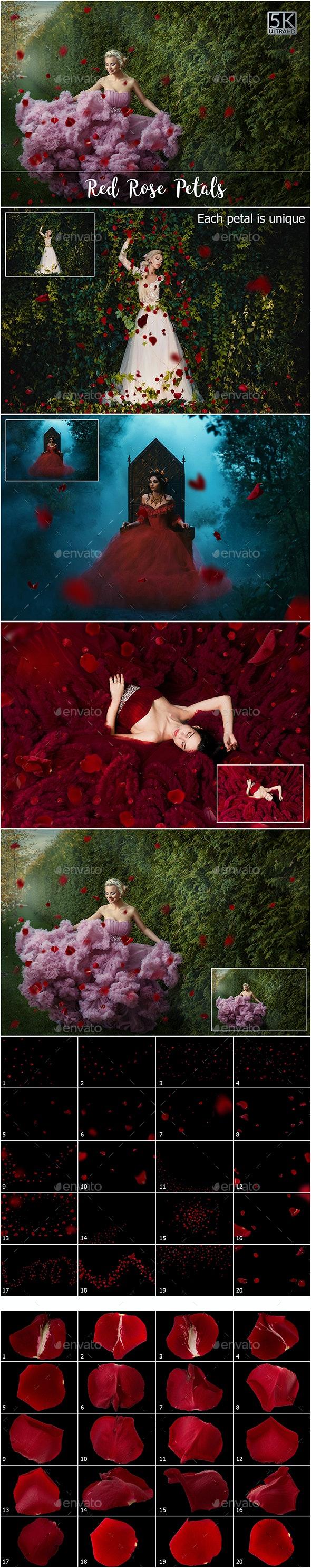 5K Red Rose Petals Overlays