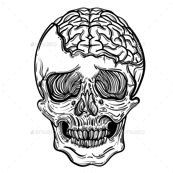Vector Illustration with a Human Skull and Brains - Health/Medicine Conceptual