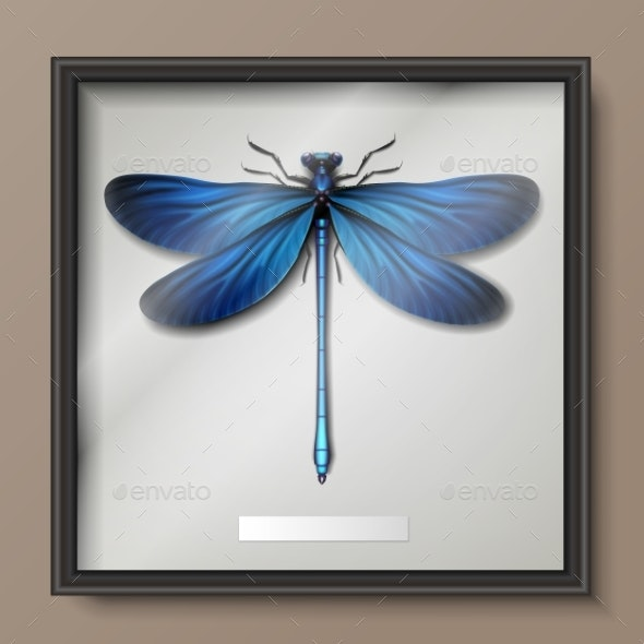 Calopteryx Virgo Dragonfly - Animals Characters