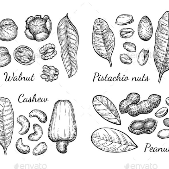 Walnut, Cashew, Pistachio and Peanut