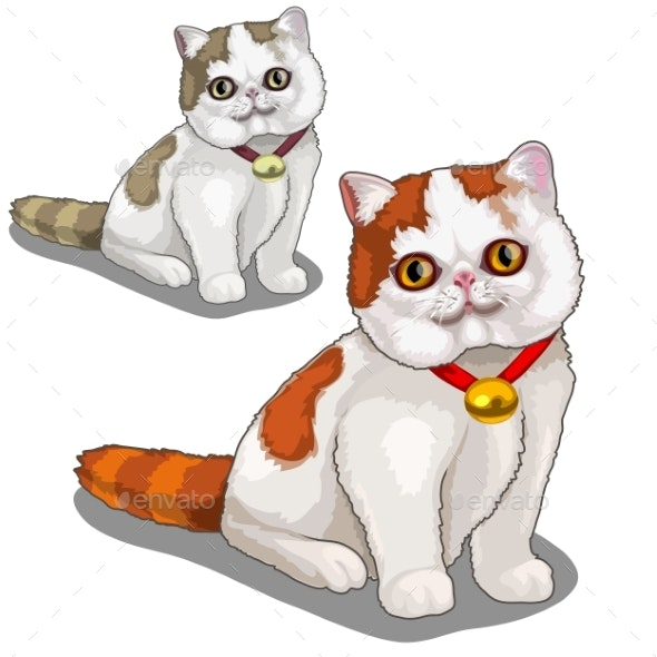 Thick Spotted Cat with a Collar - Animals Characters